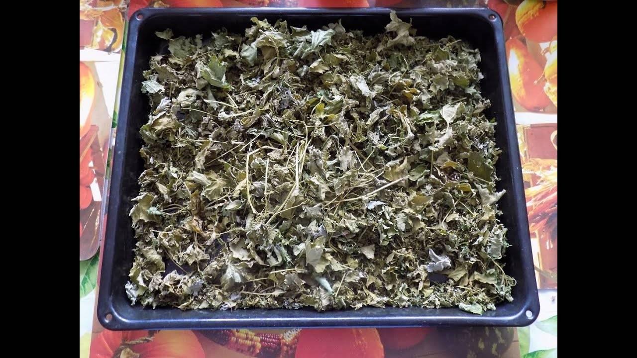 Чай из листьев вишни, из веток вишни: как заваривать