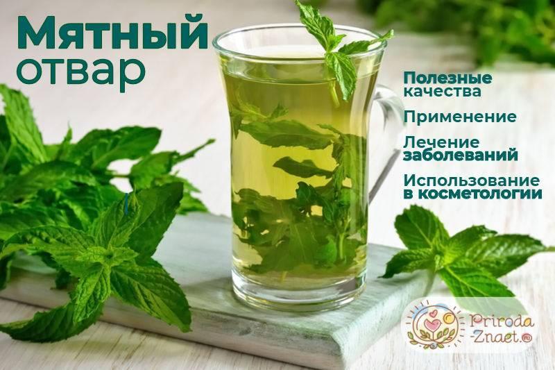 Освежающий и вкусный чай с мятой при грудном вскармливании — польза и вред, нюансы введения в рацион мамы и малыша