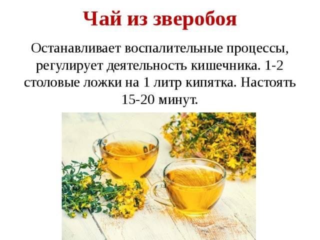 Чай из зверобоя польза и вред организму