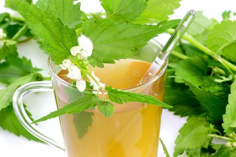 Как заварить чай из крапивы: 10 шагов
