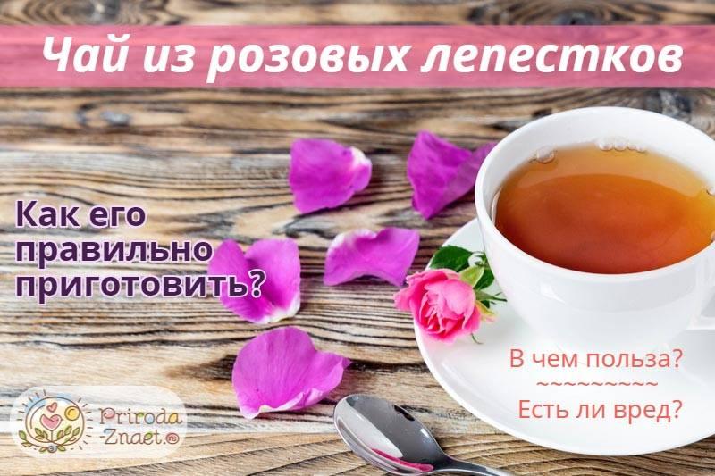 Чай из пиона польза и вред