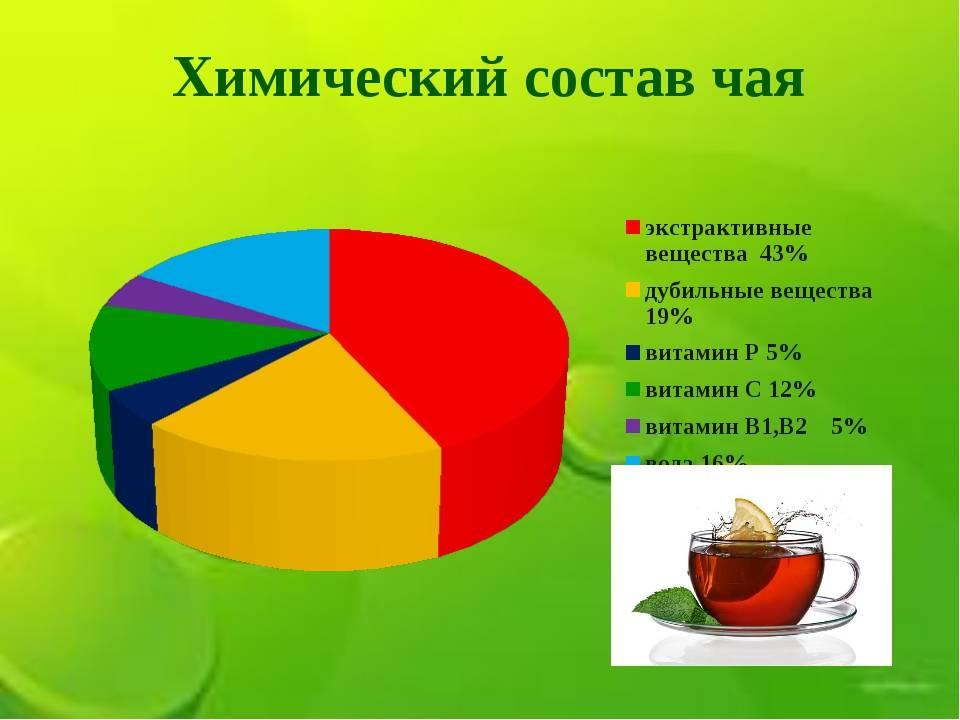 Чай: польза и вред для здоровья организма