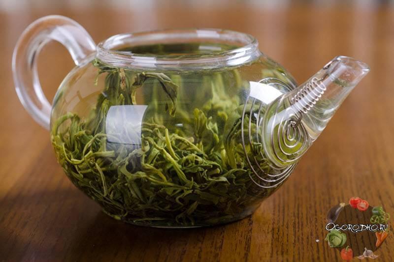Чем полезен зеленый чай и в каких случаях он вреден?