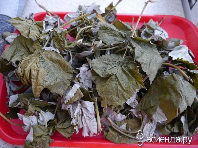 Листья малины: полезные свойства и лечебные, противопоказания, состав