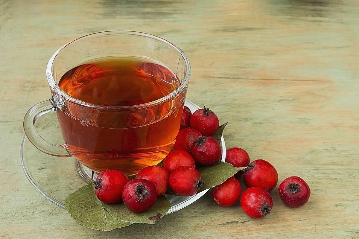 Чай из боярышника — как заваривать и пить