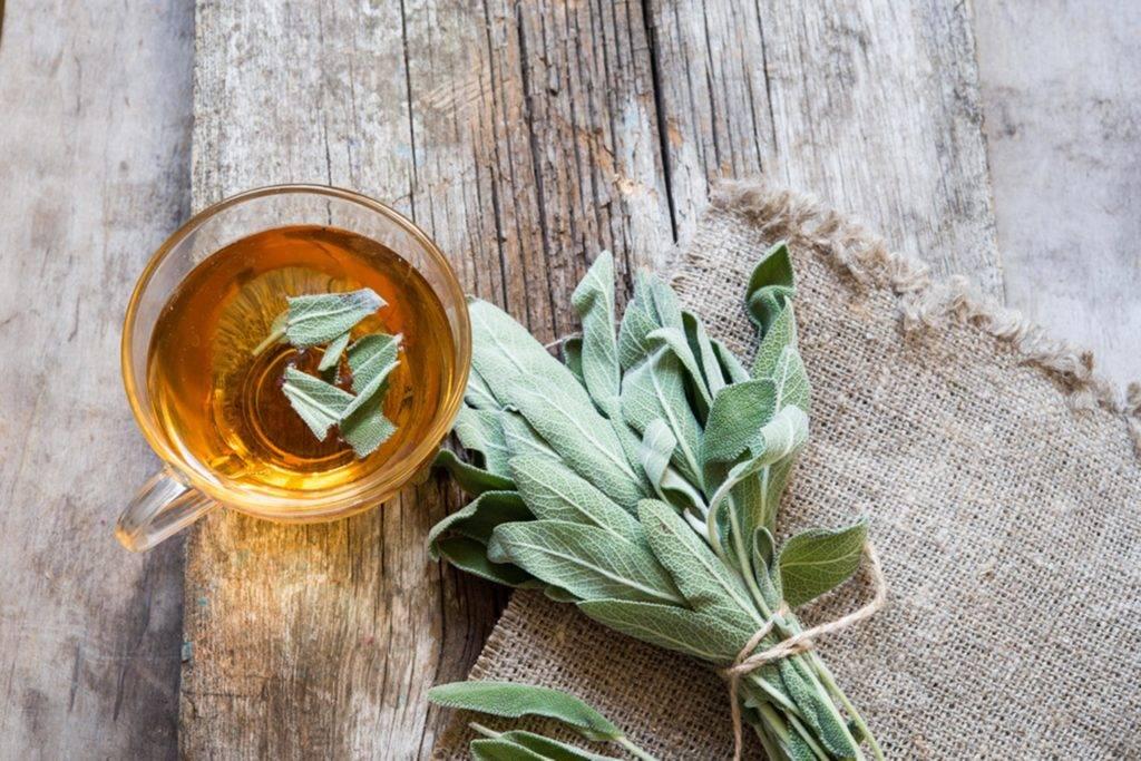 Свойства чая из листьев шалфея и противопоказания