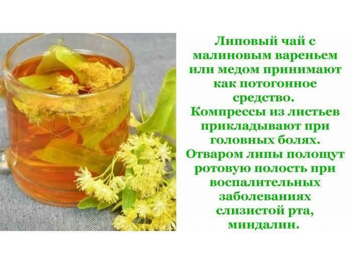 Чай из липы: польза и вред, свойства и противопоказания