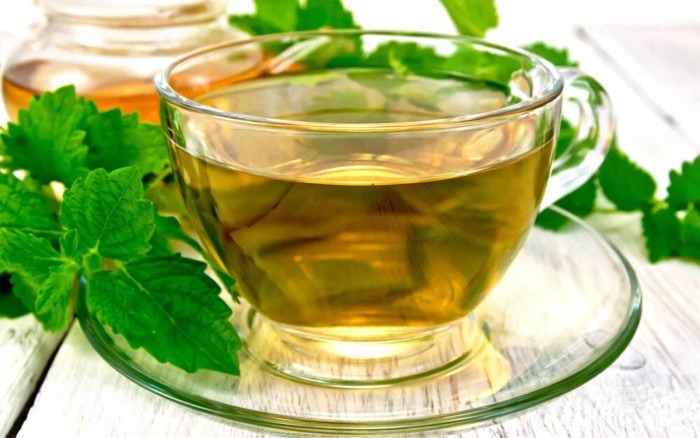 Как правильно заваривать чай с мелиссой: рецепт чая с мелиссой | блог о красоте и здоровье