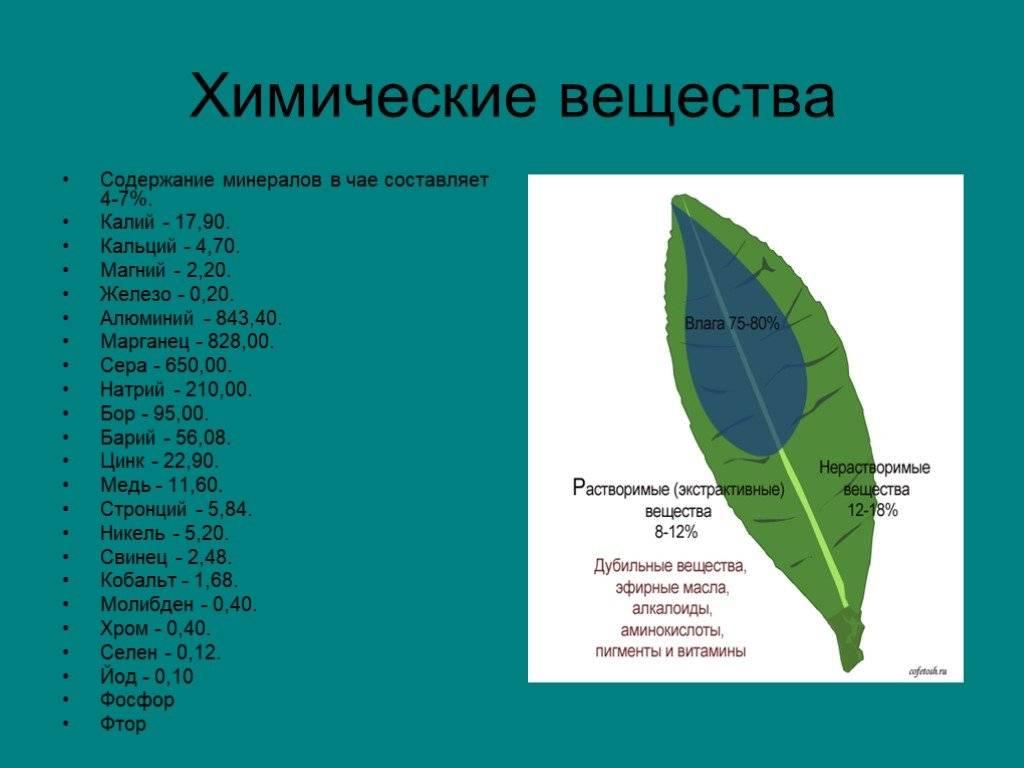 Химический состав чая, что содержится в черном в нем