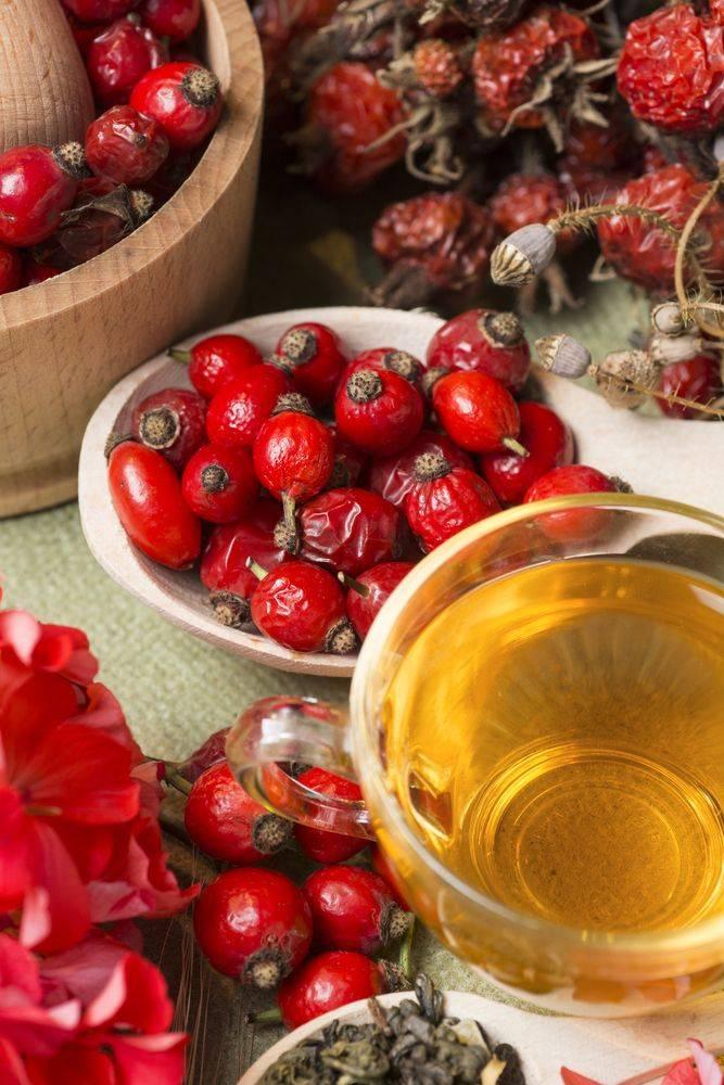 Чай из плодов шиповника: польза и вред, как приготовить