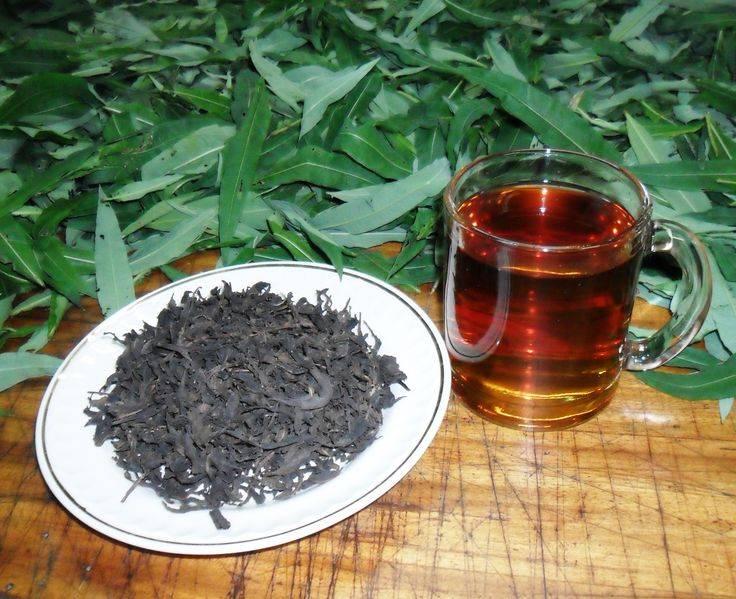 Чай из кипрея: секреты ферментации