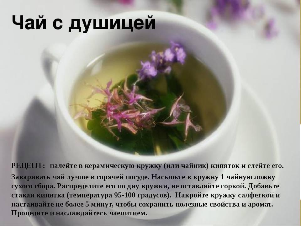 Липовый чай: состав целебного напитка, польза и вред, особенности заваривания