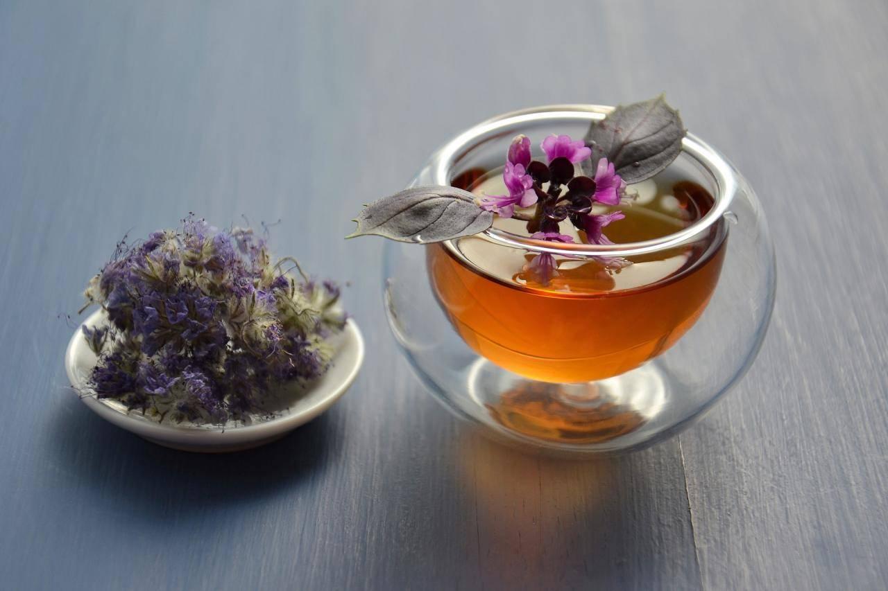 Лечебные свойства чая с базиликом