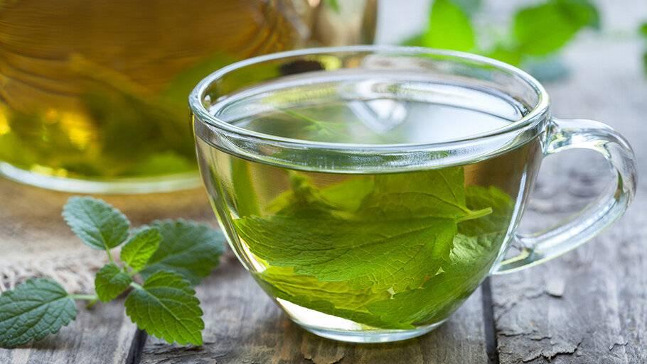 Чай с мелиссой: польза и вред, полезные свойства и противопоказания, рецепты
