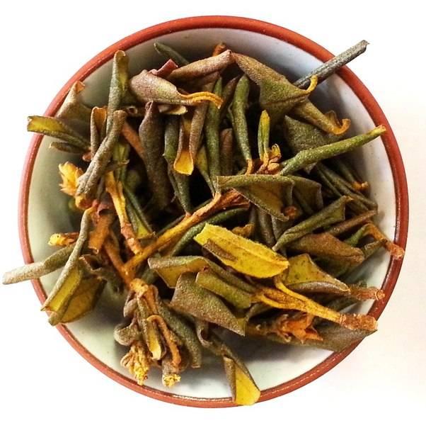 Чай саган-дайля (рододендрон адамса): свойства и противопоказания
