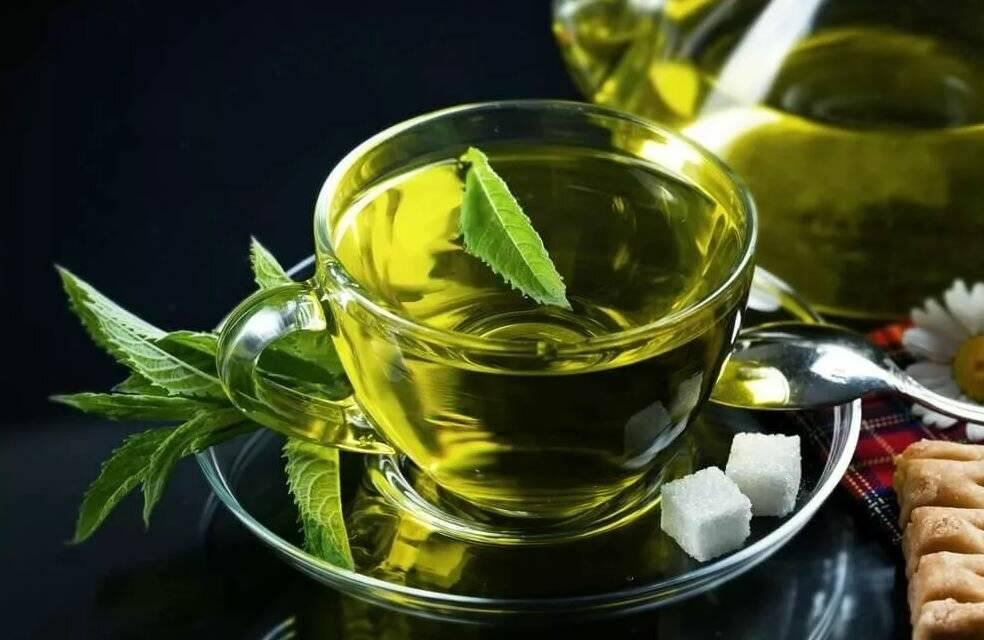 Сколько можно пить зеленого чая в день?