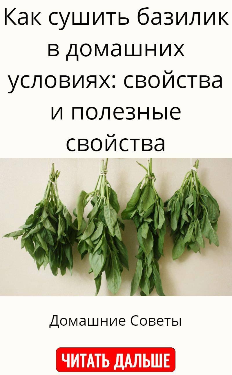 Топ 10 рецептов, как правильно заготовить на зиму базилик в домашних условиях - всё про сады