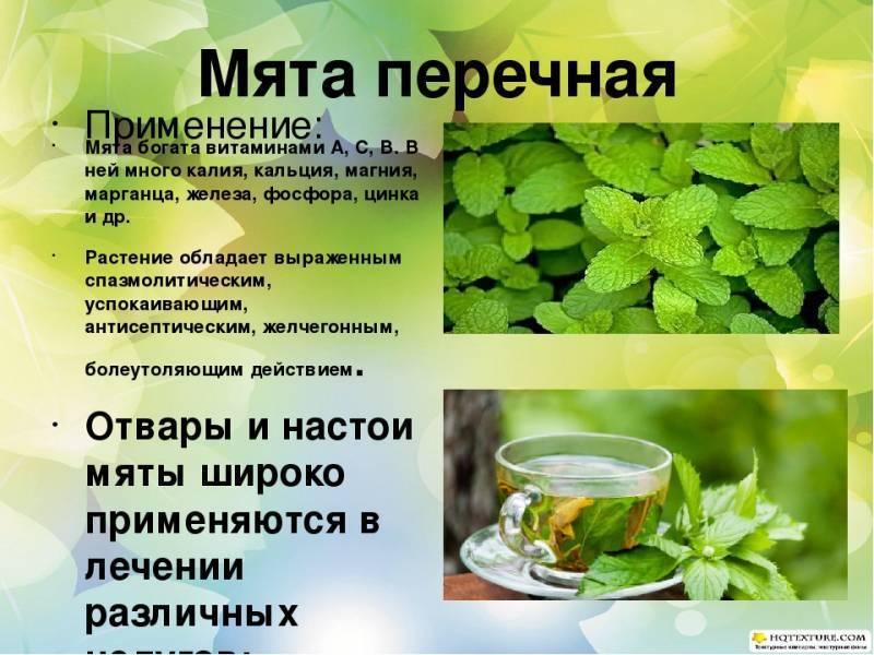 Татарский чай: рецепты приготовления