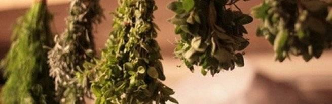 Как засушить базилик в домашних условиях на зиму: заготовка с фото (+отзывы)