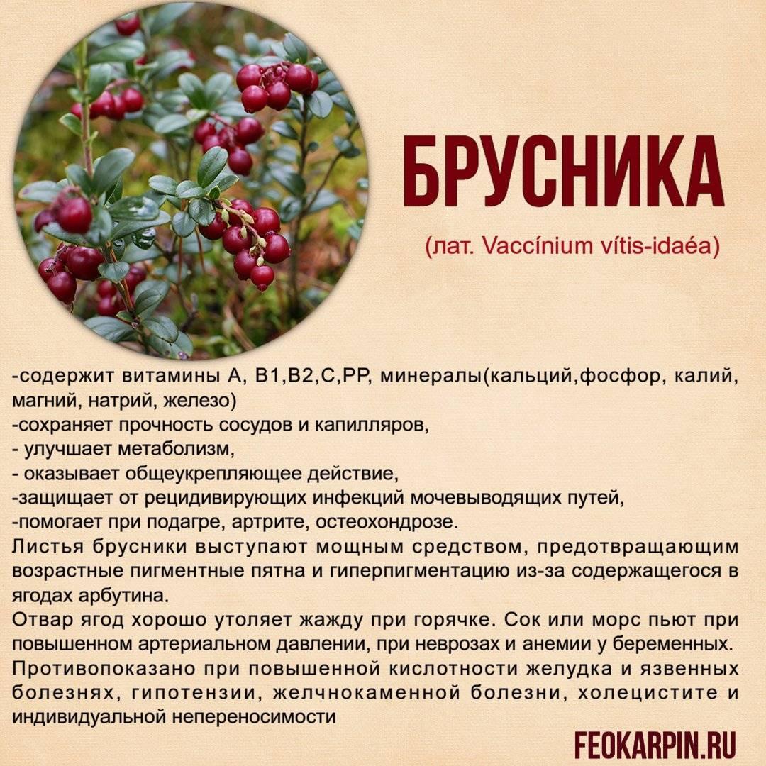 Брусничный напиток: польза брусники, основные рецепты варки компота из свежей и замороженной ягоды