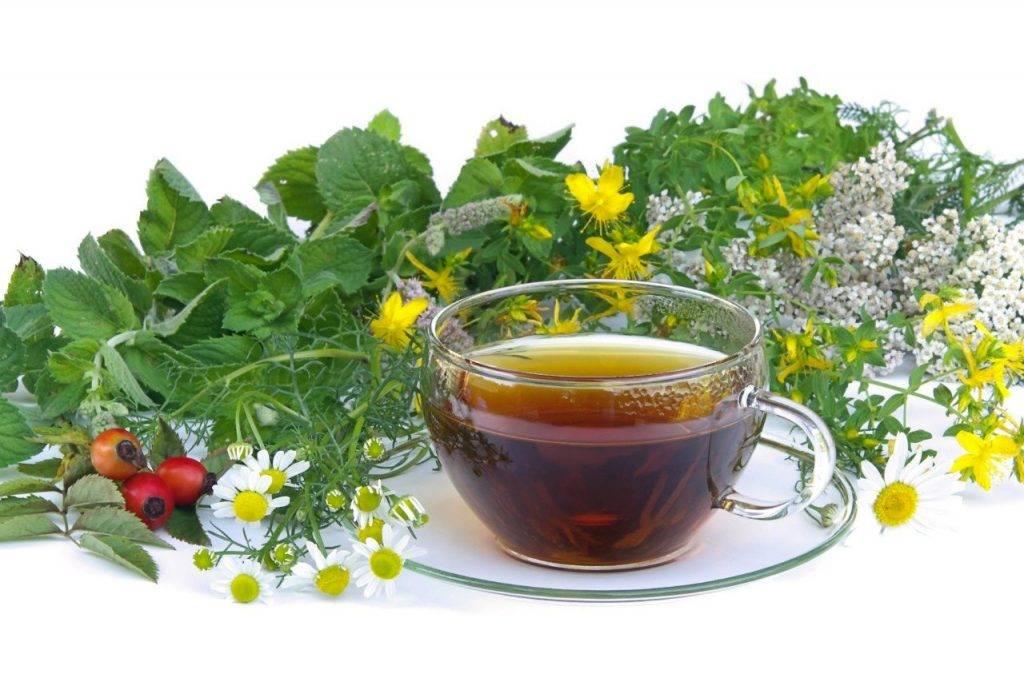Как правильно пить монастырский чай для лечения различных заболеваний