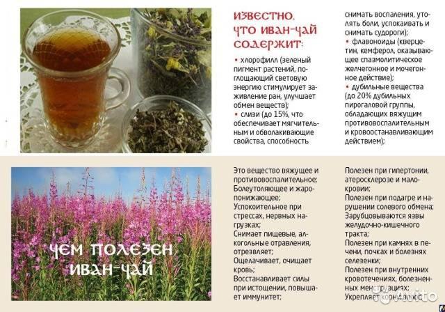 Стевия: как с умом применять лечебные свойства травы