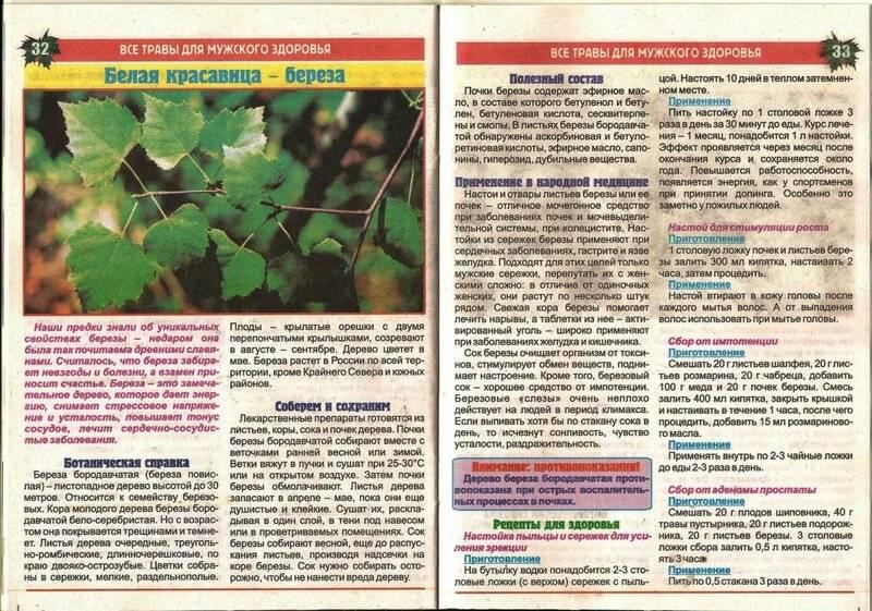 Листья березы лечебные свойства и противопоказания для похудения