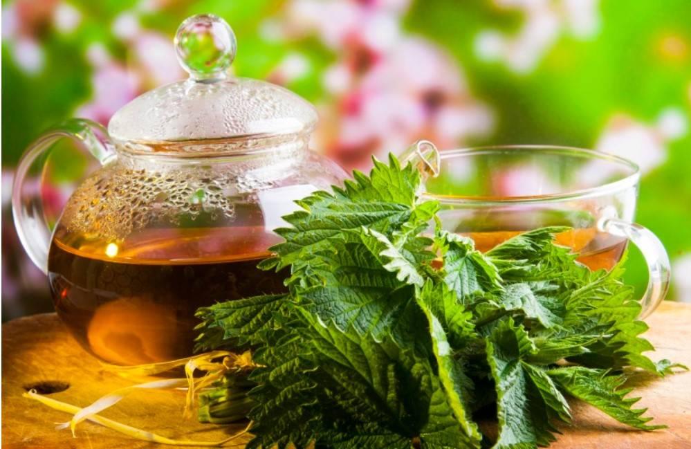 Травы для похудения — аптечные сборы и народные рецепты