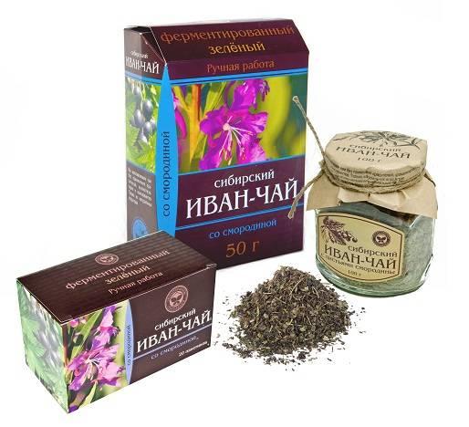 Иван-чай или кипрей: полезные свойства и противопоказания для мужчин, женщин, детей, при болезнях