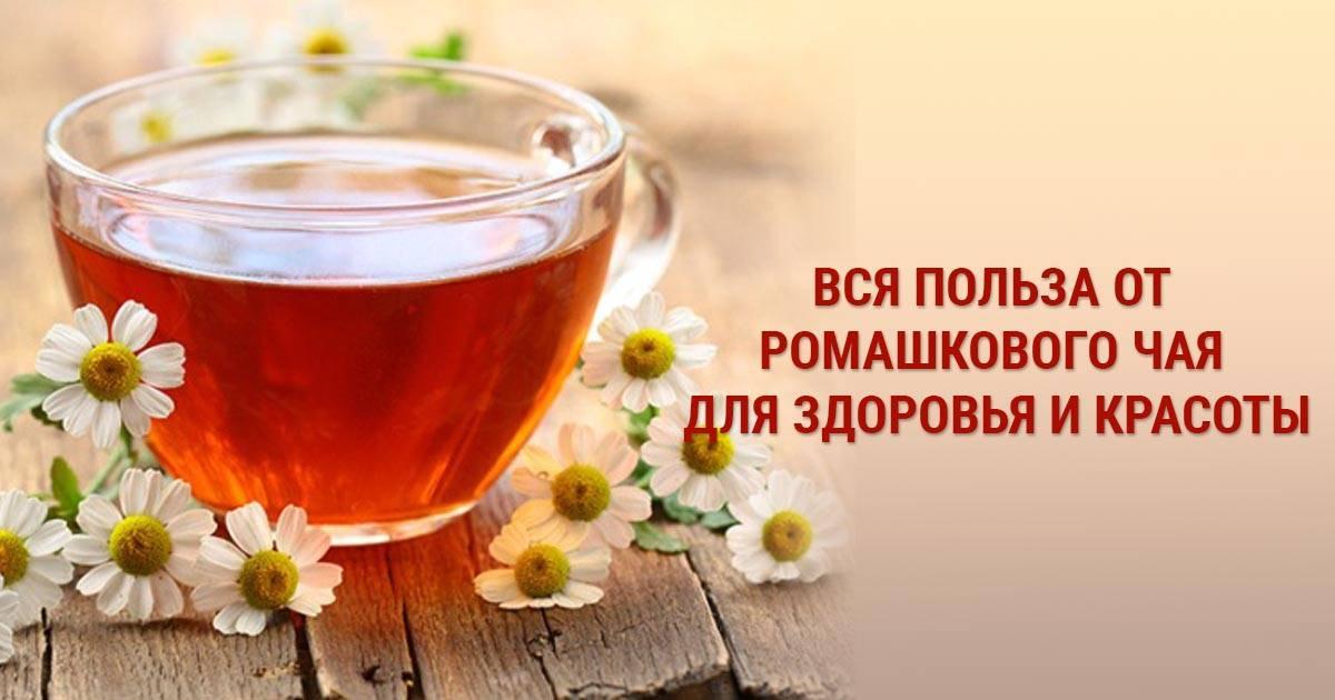 Как приготовить чай из ромашки | справочник садовской