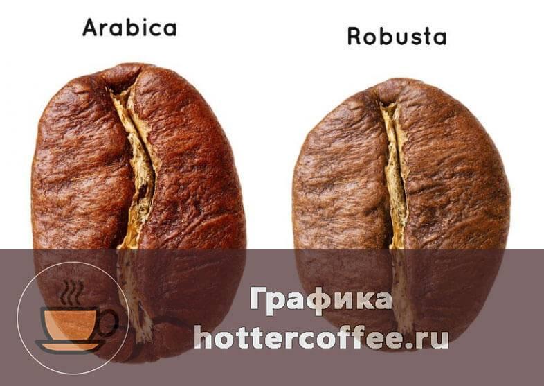 Различия арабики и робусты | какой кофе лучше и в чем разница