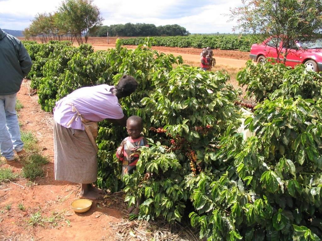 50 интересных фактов о зимбабве — общенет