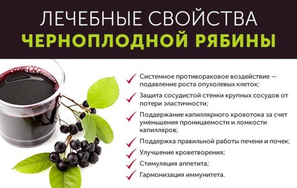 Как приготовить чай с рябиной (красной или черноплодной)