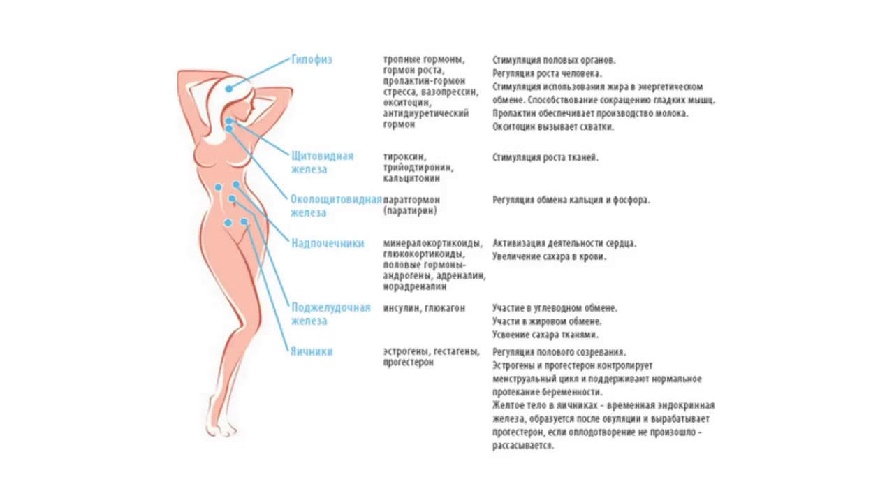 Мужские половые гормоны у женщин | университетская клиника
