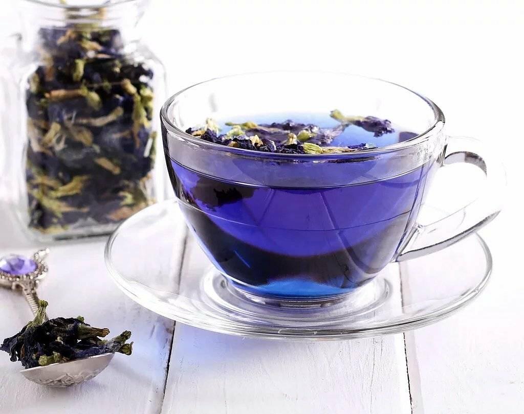 Все, что важно знать о синем тайском чае анчане: польза и вред, противопоказания