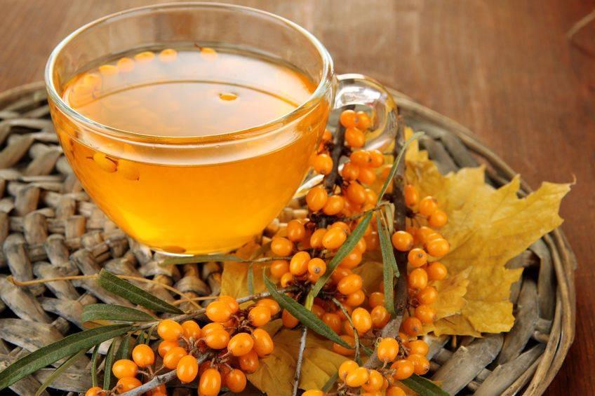 Чай с облепихой полезные свойства