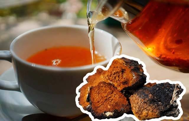 Вкусная и полезная замена обычному чаю – чай из чаги