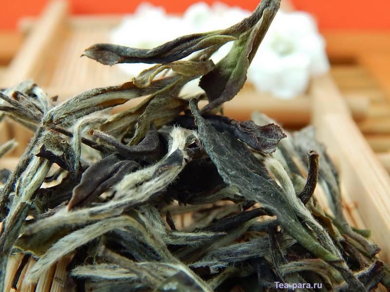 Бай Му Дань или чай белый пион