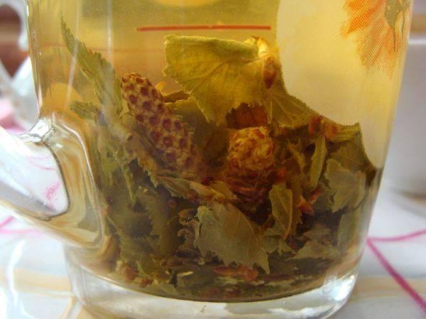Березовый чай: польза и вред, рецепты с листьями и почками березы