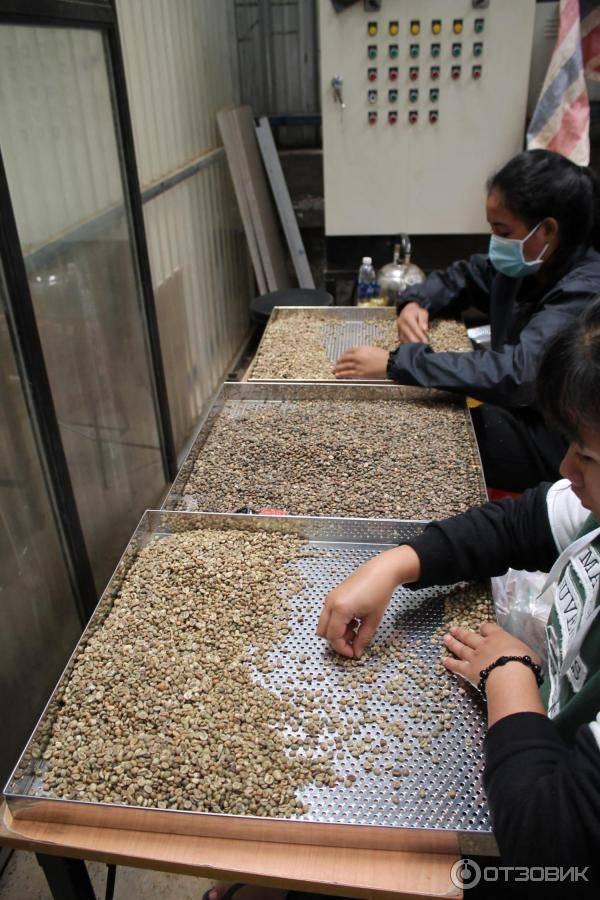 Кофейная индустрия во Вьетнаме – втором экспортере зерен в мире