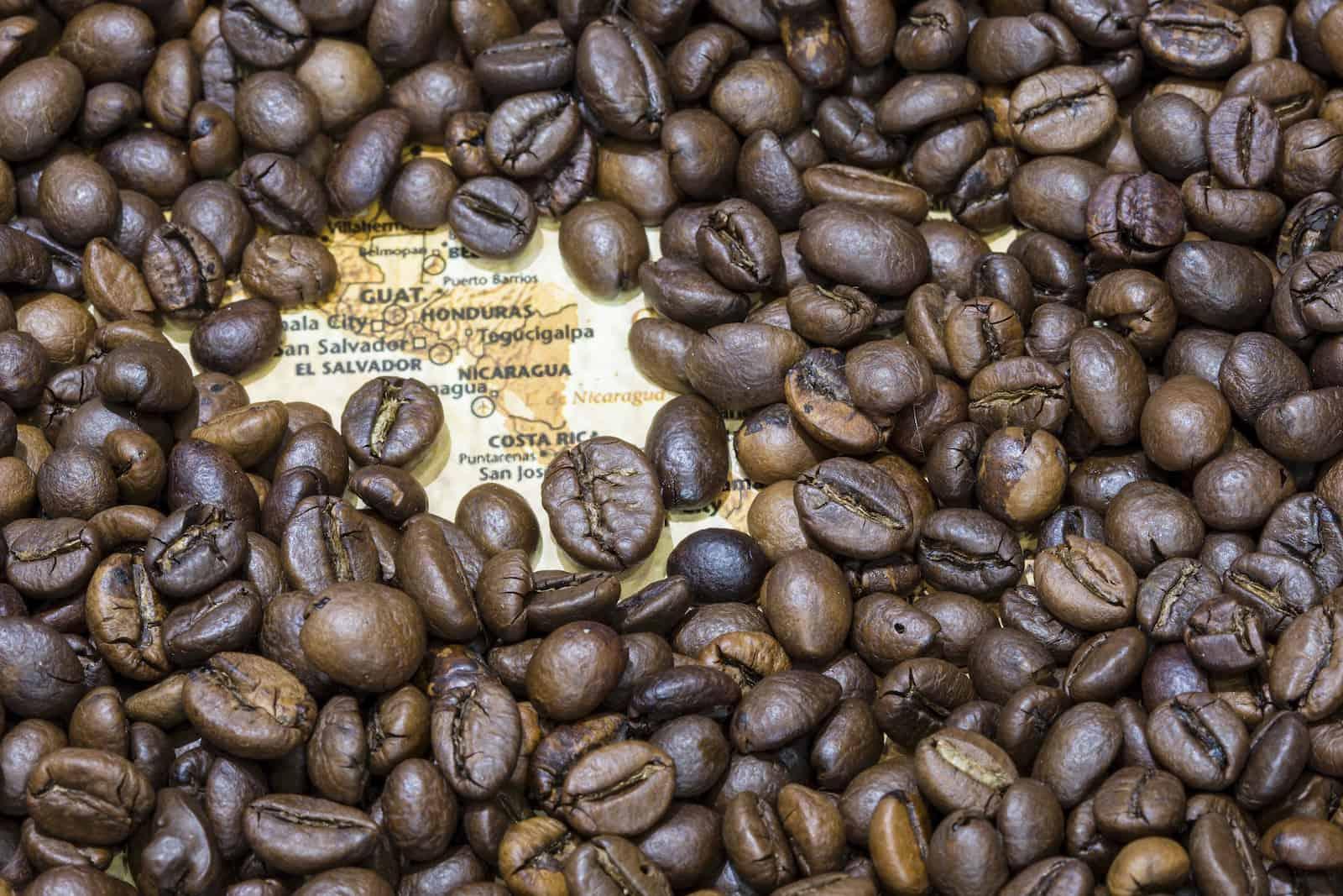 Правда ли, что робуста — показатель плохого кофе? отличия арабики отробусты, тельность напитка игоречь вовкусе
