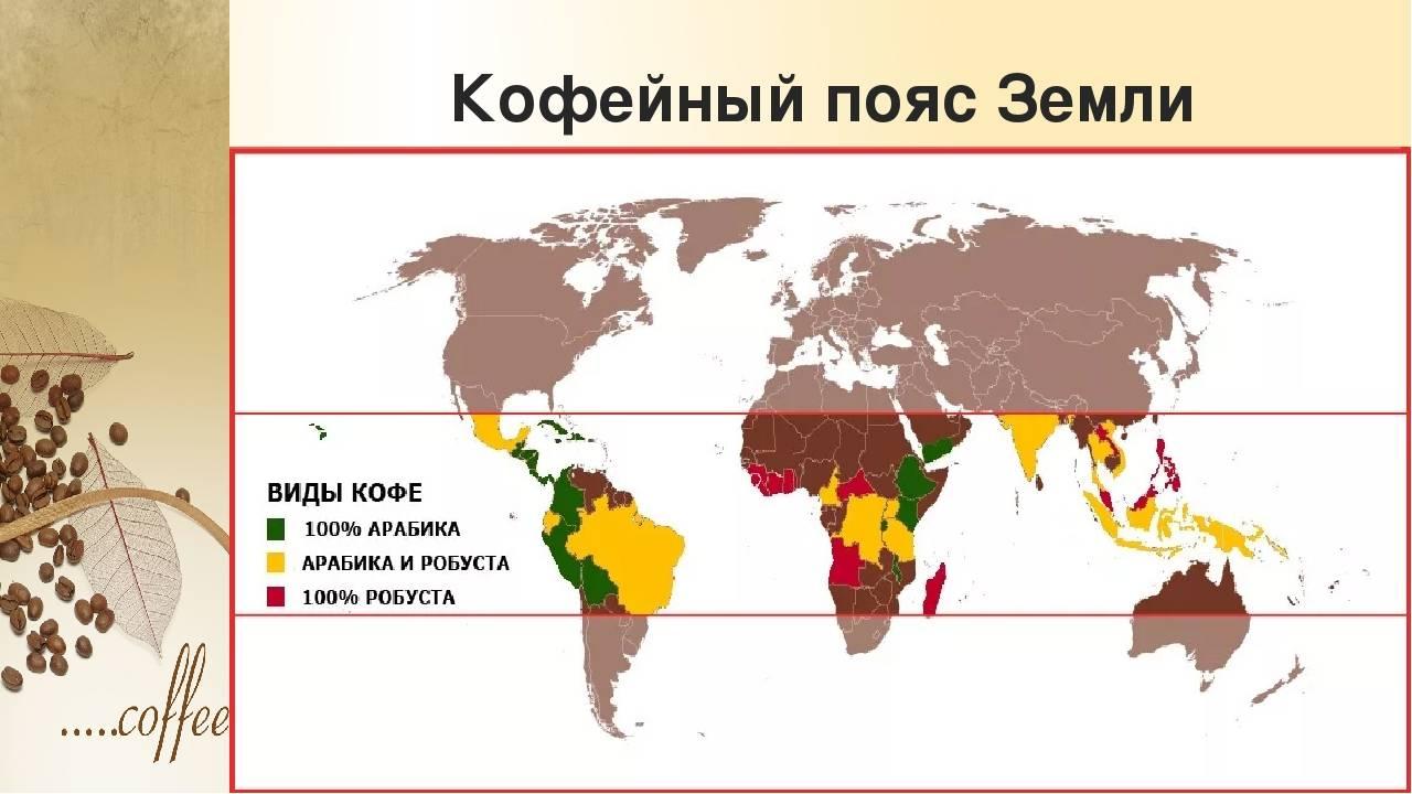 Где и как выращивают кофе. в каких странах выращивают кофе