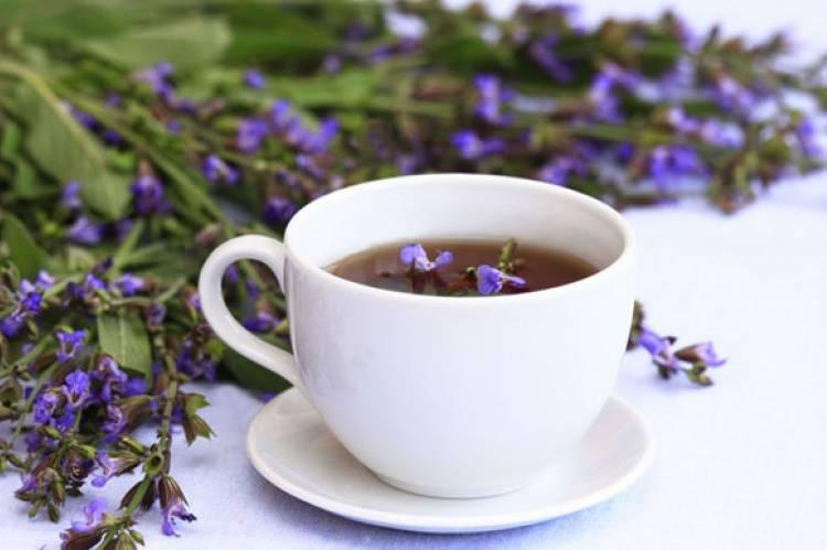 Чай с шалфеем: польза и вред, противопоказания и передозировка, как безопасно заваривать