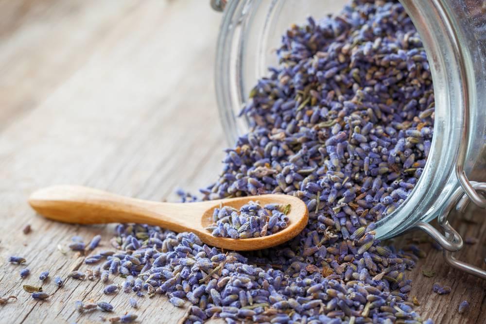 Чай с лавандой: польза и вред, лечебные свойства, рецепты лавандового чая