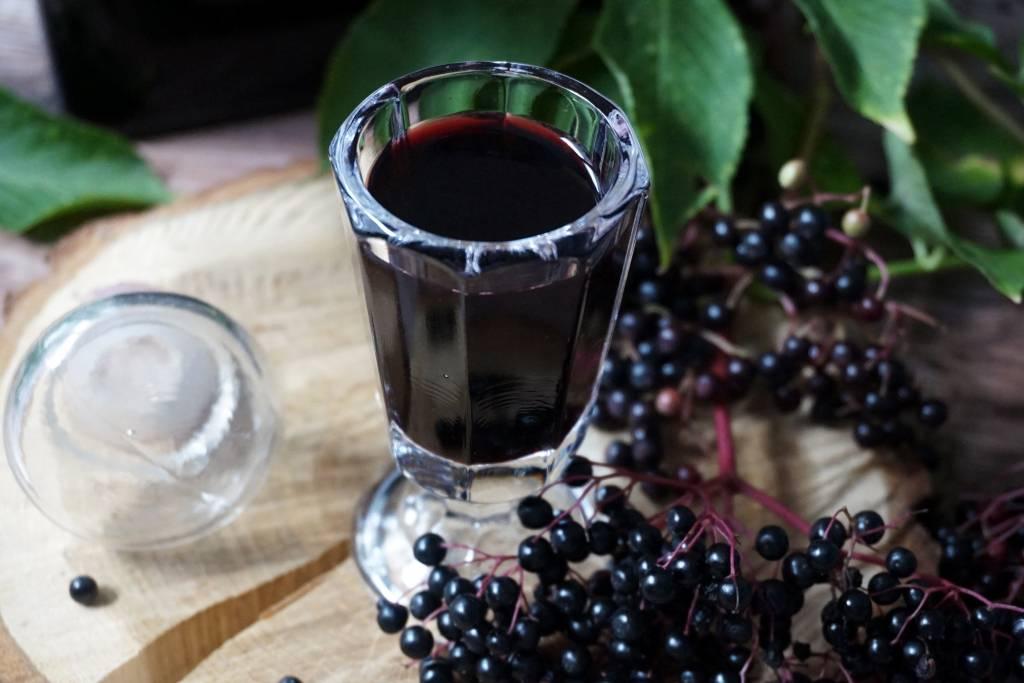 Черноплодная рябина: лечебные свойства и противопоказания для женщин и мужчин