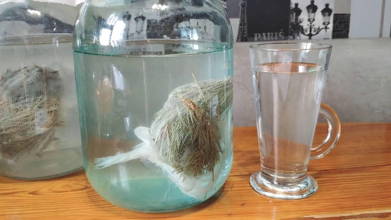 Хвойный квас на медной воде: отзывы, как приготовить, полезные свойства