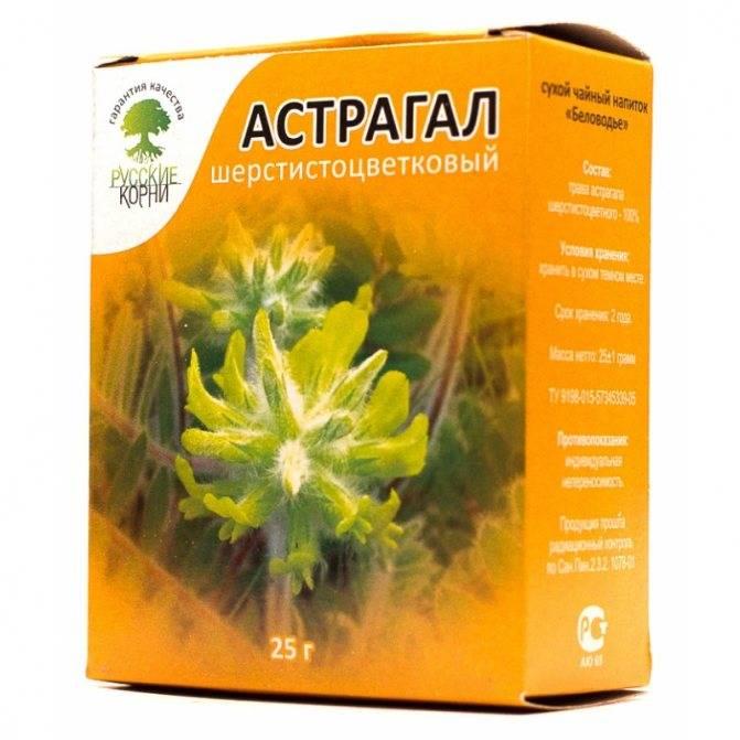 Астрагал шерстистоцветковый — лечебные свойства и противопоказания, отзывы врачей