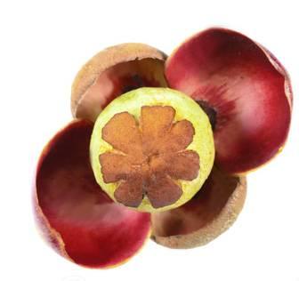 Польза мангостина - 125 фото фрукта, состава и описание экзотического мангостина