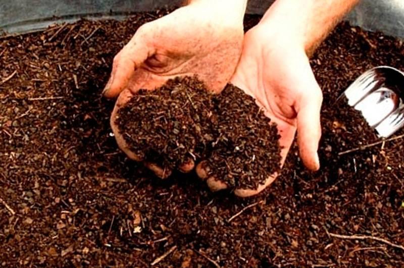 Как использовать использованную чайную заварку: удобрение, промывание