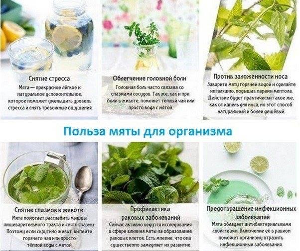 Диета на зеленом чае для похудения: виды, описание, меню, отзывы - минус 7 кг легко - похудейкина